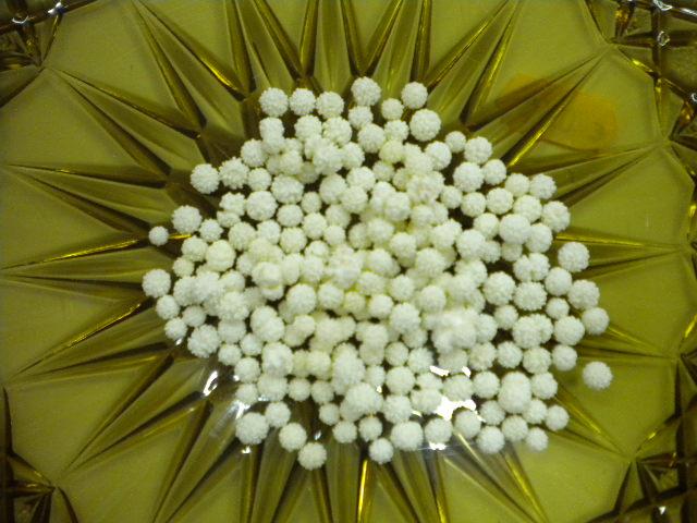 Mimose in zucchero bianco